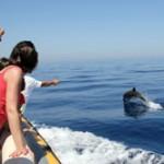 dauphins-porquerolles