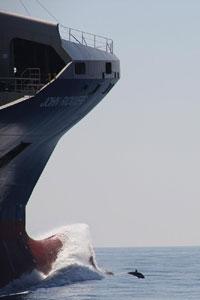 un dauphin jouant devant l'etrave d'un enorme cargo